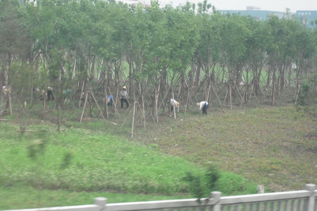 Contadini al lavoro nei campi - cinesespresso