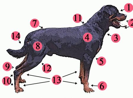 La controversa storia della carne di cane